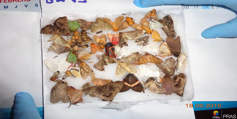 Tráfico de especies y afectación a la biodiversidad. (Pichincha. 2015)